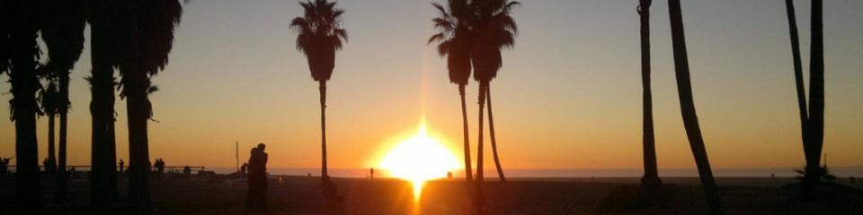 Palmen an der Pazifikküste - Venice Beach